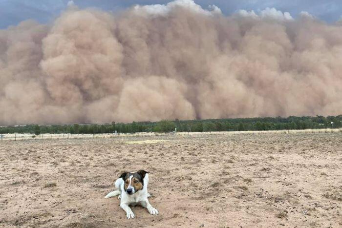 فیلم ، توفان بزرگ غبار جنوب شرق استرالیا را در می نوردد
