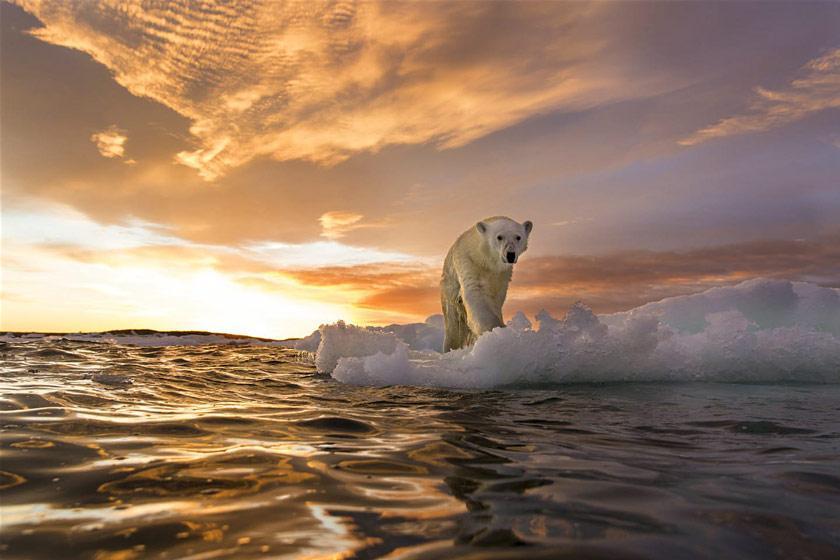 برای دیدن خرس قطبی کجا برویم؟ (قسمت اول)