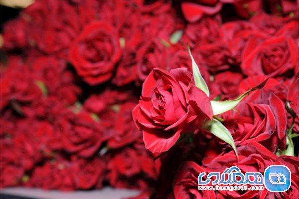 با بوییدن این گل ها بیماری های خود را درمان کنید