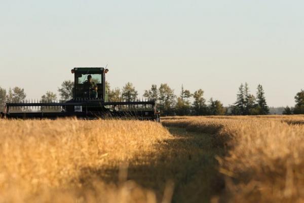 روسیه آماده محدودیت صادرات غذایی شد